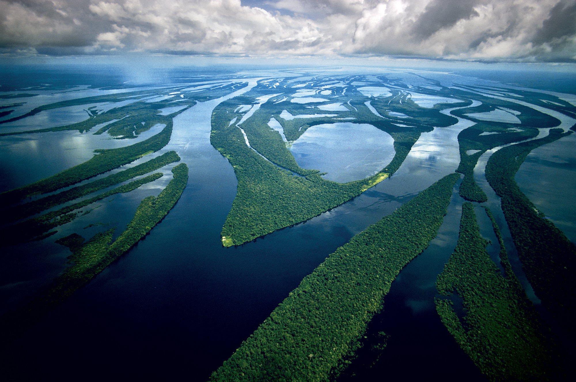 Reforestación Amazonas