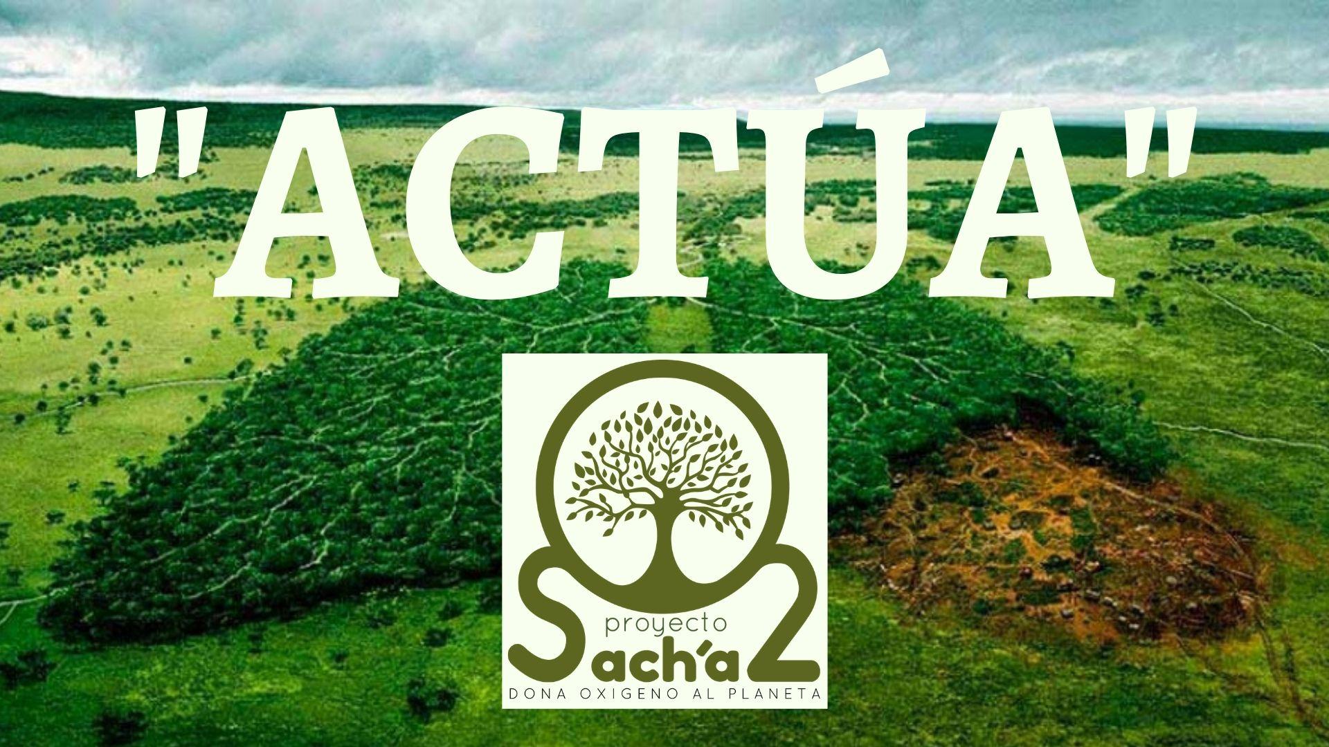 Proyecto Sacha, dona oxigeno al planeta